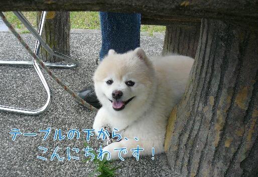 08.10.12観音崎公園①.jpg
