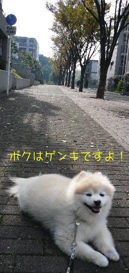 08.10下旬ー11月初旬②.JPG