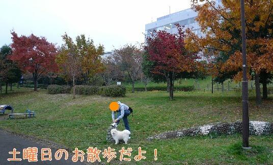 08.11.15雨曇りの散歩と新しい携帯①.jpg