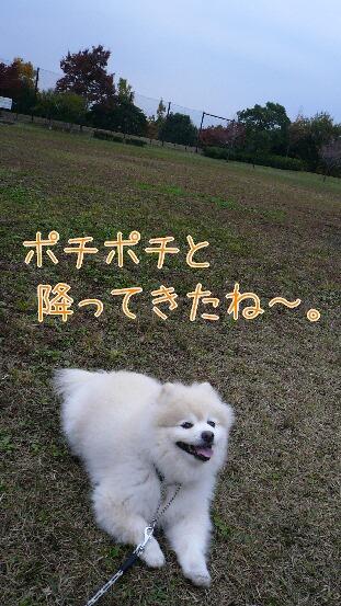 08.11.15雨曇りの散歩と新しい携帯②.jpg