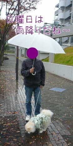 08.11.15雨曇りの散歩と新しい携帯③.jpg