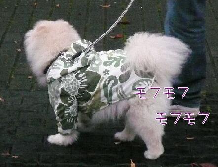 08.11.15雨曇りの散歩と新しい携帯④.jpg