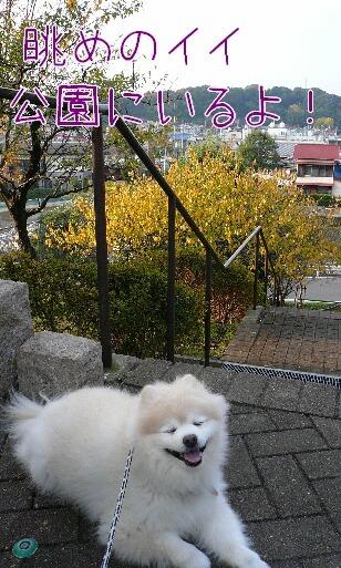 08.11.15雨曇りの散歩と新しい携帯⑥.jpg