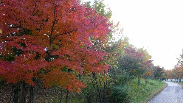 08.11.18お散歩紅葉とポニー④.jpg