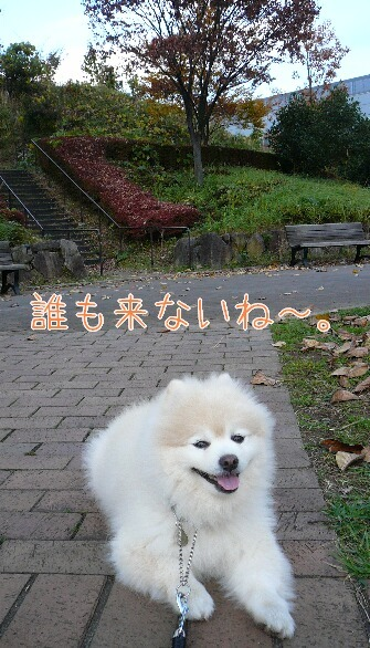 08.11.18お散歩紅葉とポニー⑥.jpg