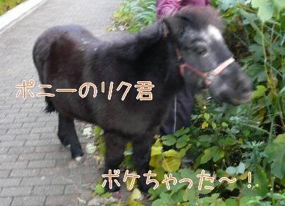 08.11.18お散歩紅葉とポニー⑦.jpg