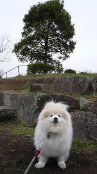 08.3.19散歩カナリヤ公園①.JPG