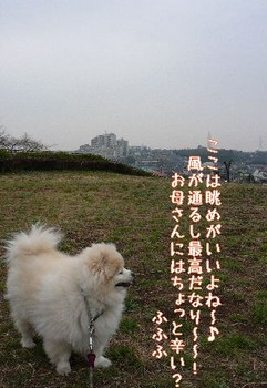 08.3.19散歩カナリヤ公園③.JPG