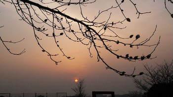 08.3.19散歩カナリヤ公園④.JPG