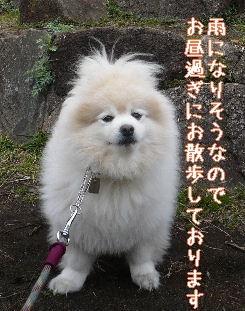 08.3.19散歩カナリヤ公園⑦.JPG