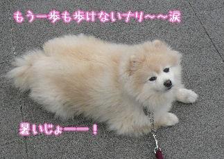 08.3梅モクレン散歩①.JPG