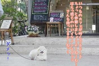 08.3梅モクレン散歩⑤.JPG