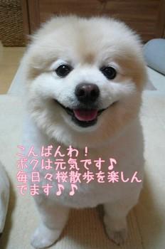 08.4.2桜三昧①.JPG