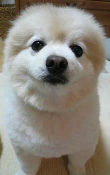 08.4.2桜三昧②.JPG