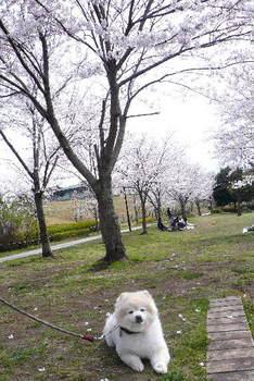 08.4.2桜三昧⑲.JPG