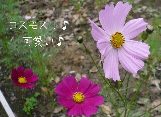 08.6月初旬センター北あたり④.jpg