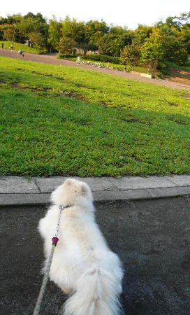 08.9.10公園と悟空ちゃん⑦.JPG