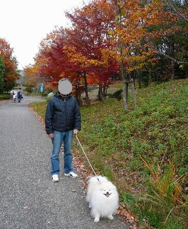 09.11月下旬紅葉遊歩道散策③.jpg