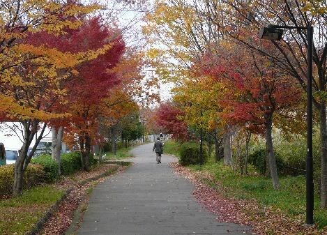 09.11月下旬紅葉遊歩道散策④.jpg