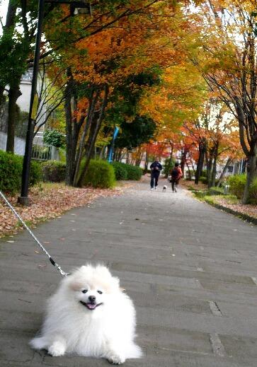 09.11月下旬紅葉遊歩道散策⑥.jpg