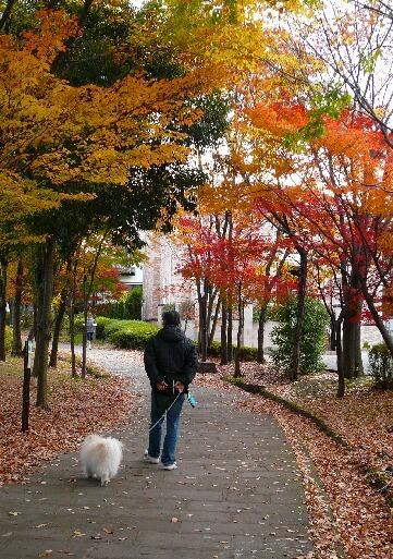 09.11月下旬紅葉遊歩道散策⑦.jpg