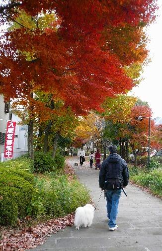 09.11月下旬紅葉遊歩道散策⑧.jpg