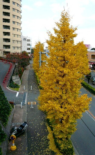 09.11月下旬紅葉遊歩道散策⑪.jpg