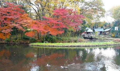09.11月下旬紅葉遊歩道散策⑫.jpg