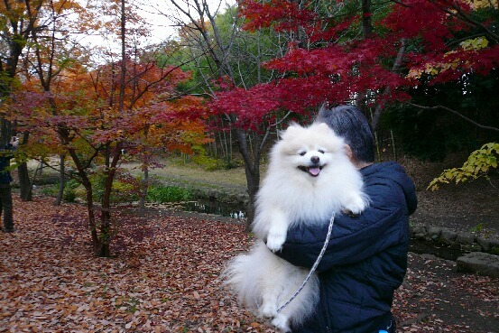 09.11月下旬紅葉遊歩道散策⑮.jpg