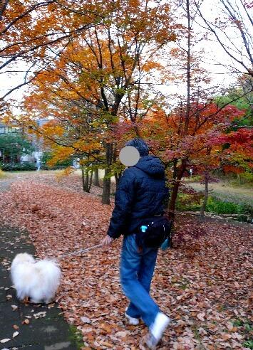 09.11月下旬紅葉遊歩道散策⑳.jpg