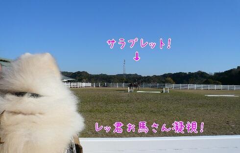 10.1.9-11房総旅行⑰.jpg