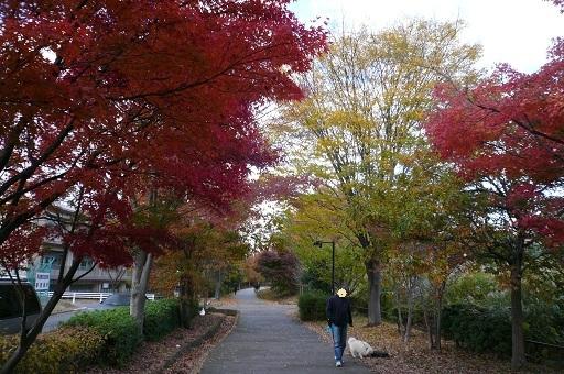 2010.11.23仲町台散歩①.jpg