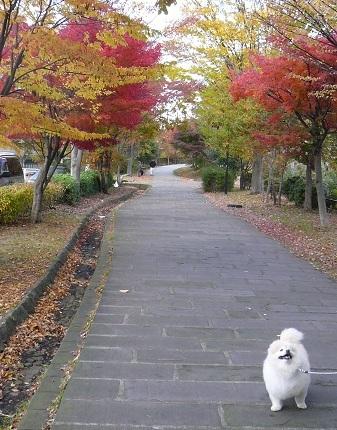2010.11.23仲町台散歩②jpg.jpg