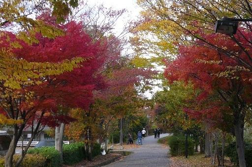 2010.11.23仲町台散歩③.jpg
