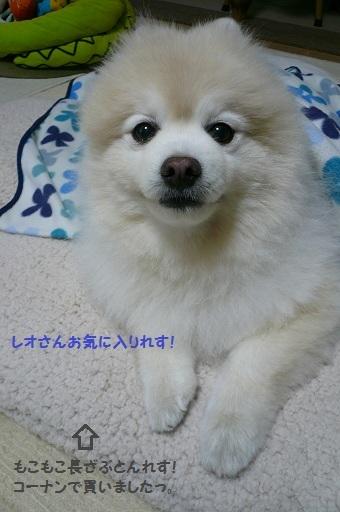 2010.11.23仲町台散歩④.jpg