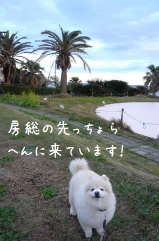 2011.12.9-10房総プチ旅行①.JPG
