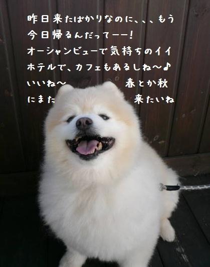 2011.12.9-10房総プチ旅行⑬.JPG