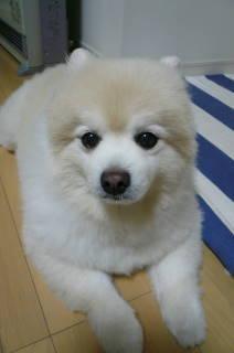 2011.秋12月初旬までのレオ①.JPG