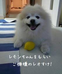 2011.秋12月初旬までのレオ⑦.JPG