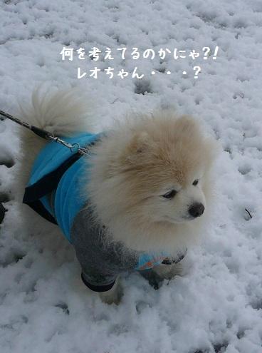 2012.0303レオお誕生日!⑤.jpg