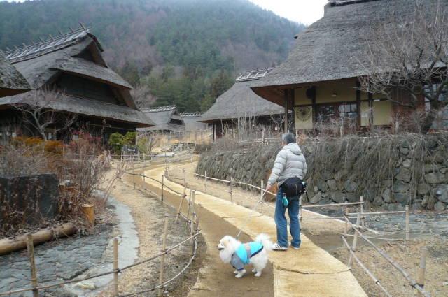 2012.3-4月河口湖&桜開花⑥.JPG