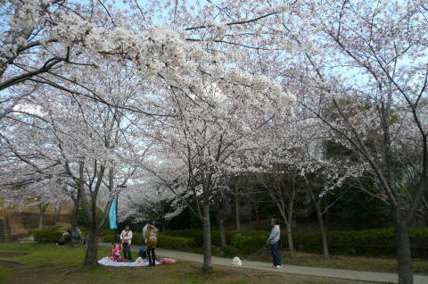 2012.4.7桜散歩28.JPG