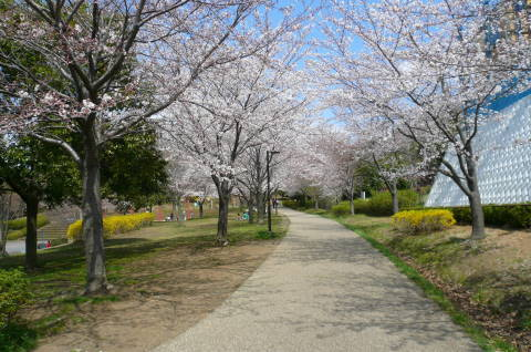 2012.4.7桜散歩⑯.JPG