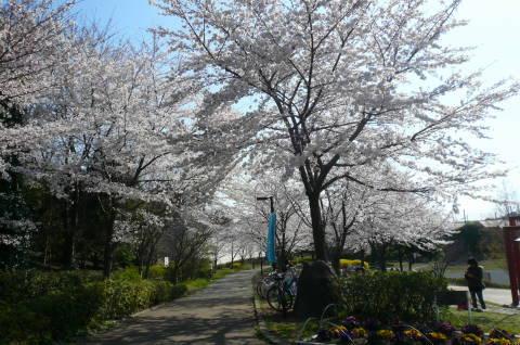 2012.4.8桜お花見散歩②.JPG