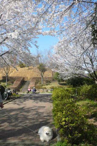 2012.4.8桜お花見散歩⑧.JPG