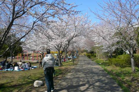 2012.4.8桜お花見散歩⑪.JPG