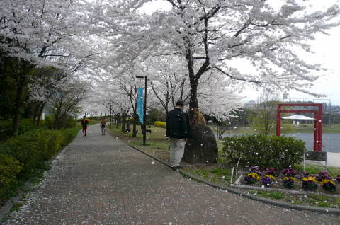 2012.4.9-15桜三昧③.JPG