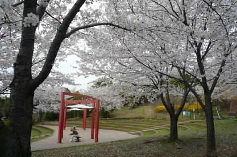 2012.4.9-15桜三昧⑪.JPG